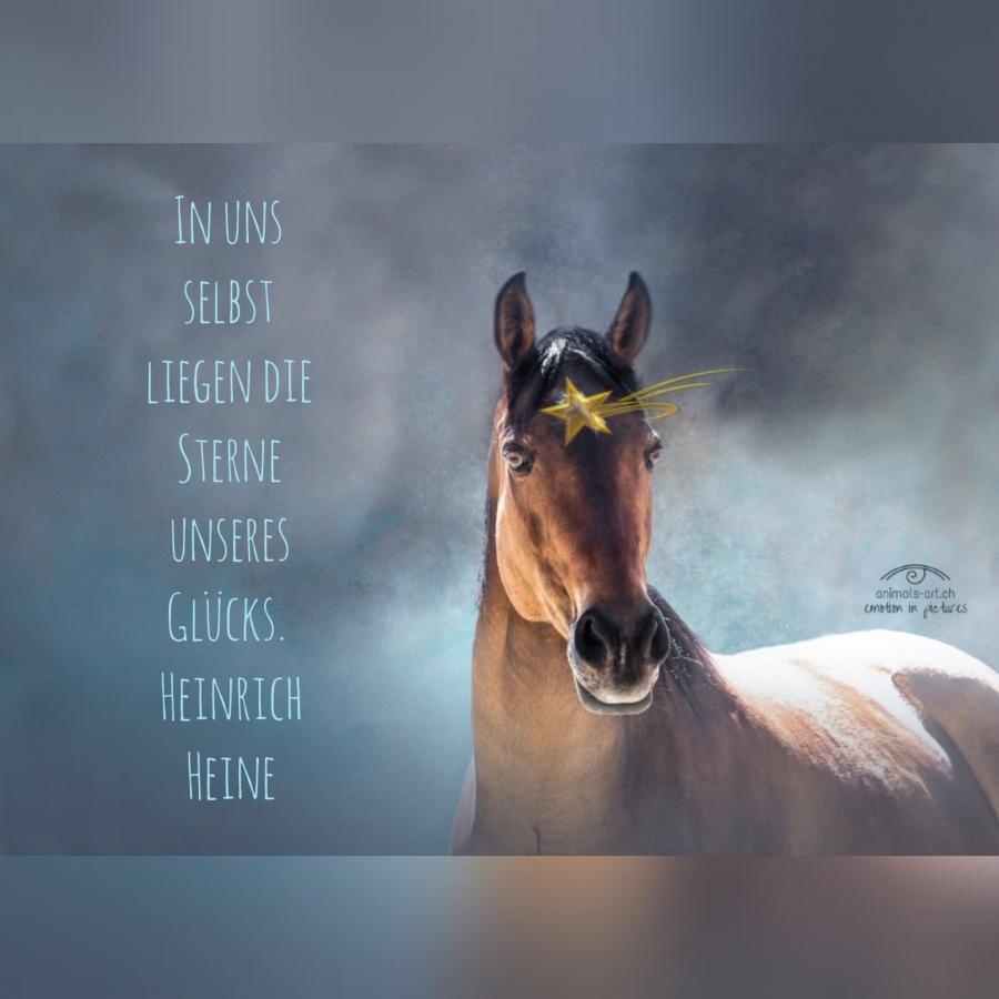 Neuigkeiten rund um ... | Zweites Leben für Sportpferde - Schweiz