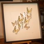 Details: Schmetterlings Weiss/Gelb