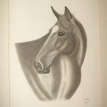 Details: Zeichnung Pferd 3