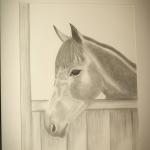 Details: Zeichnung Pferd 4