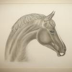 Details: Zeichnung Pferd 6