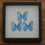 Details: Schmetterlingsbild Blau - Trio