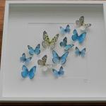 Details: Schmetterlingsbild Blau/Weiss