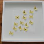 Details: Schmetterlingsbild Gelb 1