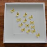 Details: Schmetterlingsbild Gelb 2